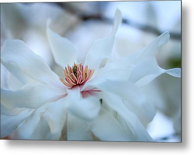 The Center Of Beauty Metal Print by Joni Eskridge