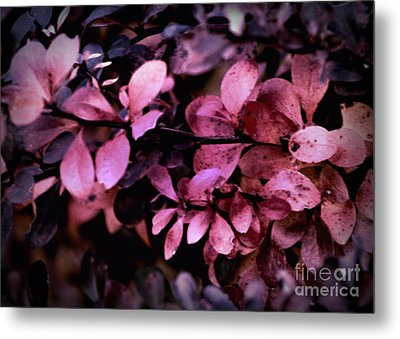 The Changing Of The Seasons Metal Print