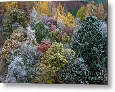 The Changing Season Metal Print by Tim Gainey