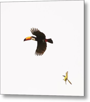 Metal Print featuring the photograph The Chase by Alex Lapidus