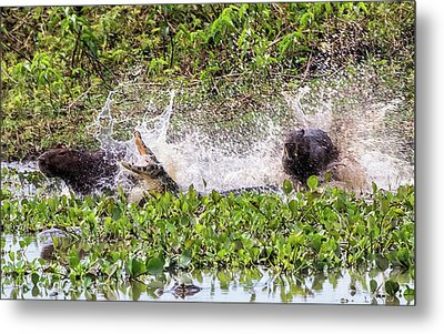 Metal Print featuring the photograph the Chase by Wade Aiken