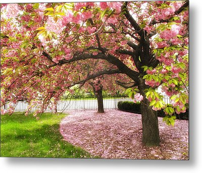 The Cherry Tree Metal Print by Jessica Jenney