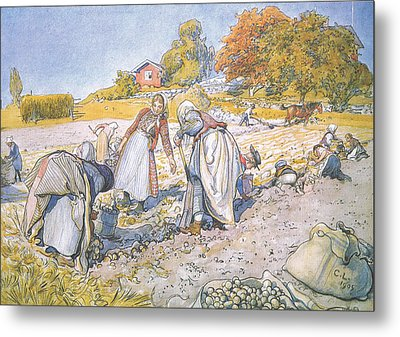 The Children Filled The Buckets And Baskets With Potatoes Metal Print by Carl Larsson