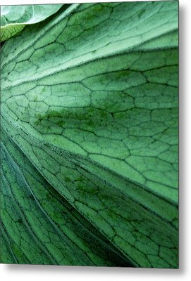 The Color Green Metal Print by Gwyn Newcombe