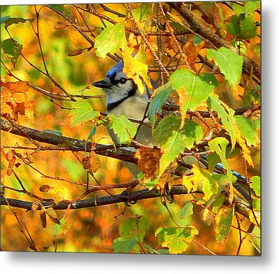 The Colors Of Autumn Metal Print by Karen Cook