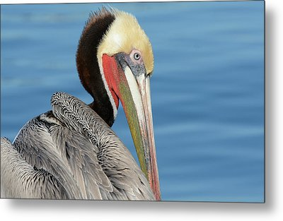 The Colors Of Love Metal Print by Fraida Gutovich