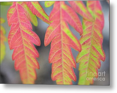 The Colors Of Shumac 8 Metal Print by Victor K