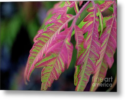The Colors Of Shumac 9 Metal Print by Victor K