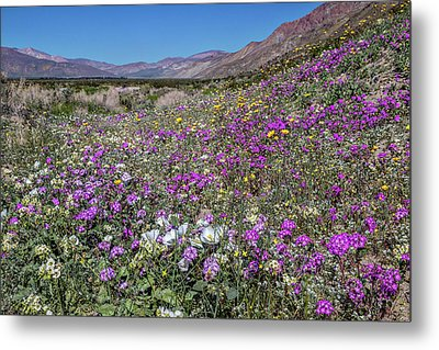 Metal Print featuring the photograph The Colors Of Spring Super Bloom 2017 by Peter Tellone