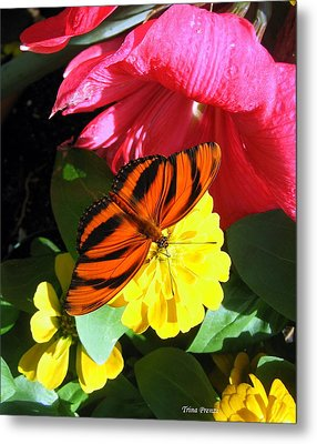 The Colors Of Summer Metal Print by Trina Prenzi