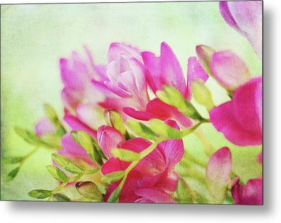 Metal Print featuring the photograph Colour Full Freesia by Connie Handscomb