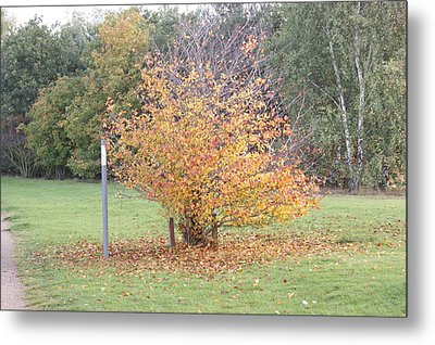 The Colours Of Autumn 5 Metal Print