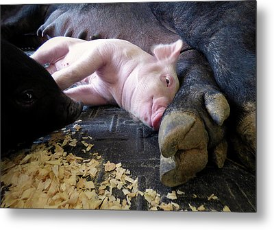 Metal Print featuring the photograph The Comfort Of Mom by Robert Geary