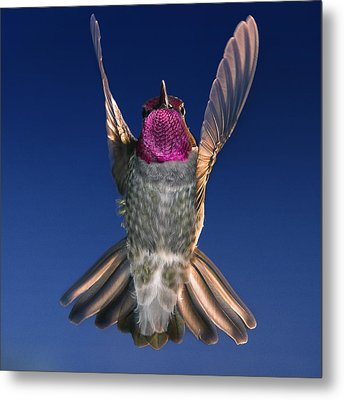 The Conductor Of Hummer Air Orchestra Metal Print by William Lee