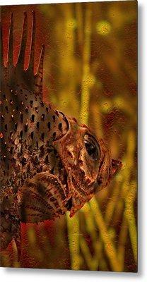 The Copper Rockfish Metal Print