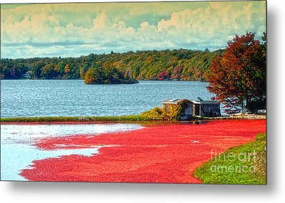 The Cranberry Farm On Cape Cod Metal Print by Gina Cormier