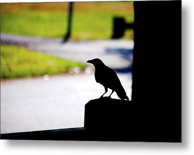 Metal Print featuring the photograph The Crow Awaits by Karol Livote