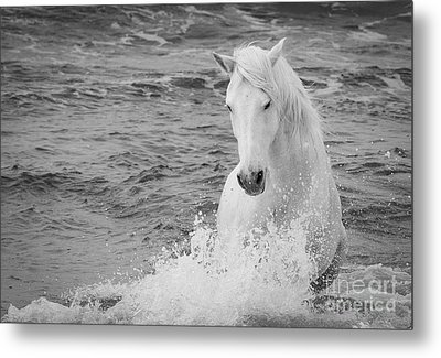The Curve Of The White Horse Metal Print by Carol Walker