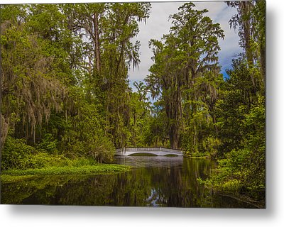 Metal Print featuring the photograph The Cypress Garden by Steven Ainsworth