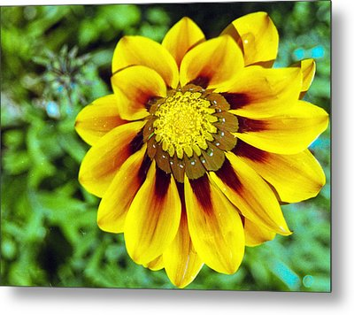 Metal Print featuring the photograph The Daisy by Matthew Bamberg