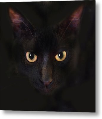 Metal Print featuring the photograph The Dark Cat by Gina Dsgn