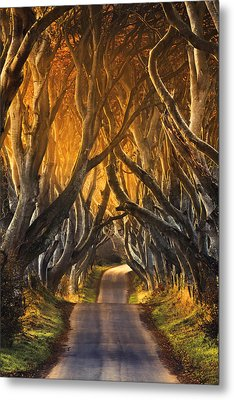 The Dark Hedges IIi Metal Print by Pawel Klarecki