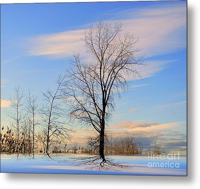 The Delight Metal Print by Elfriede Fulda