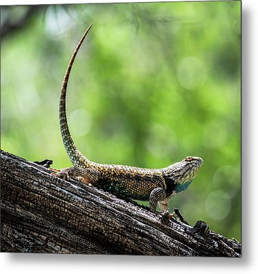 Metal Print featuring the photograph The Desert Spiny Stance  by Saija Lehtonen