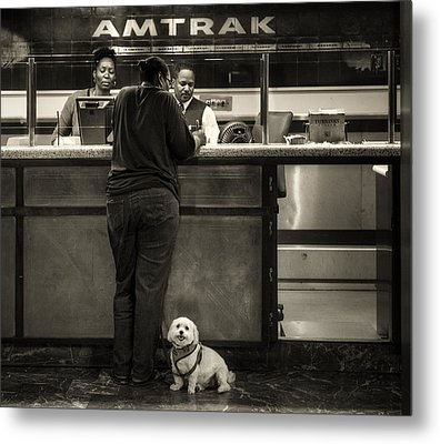 The Doggy Wants A Seat By The Window.. Metal Print