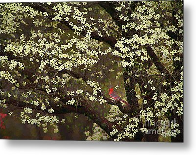 The Dogwoods And The Cardinal Metal Print by Darren Fisher