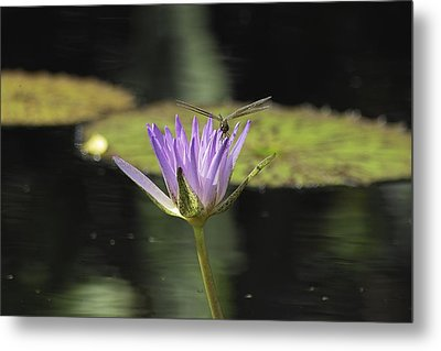The Dragonfly And The Lily Metal Print