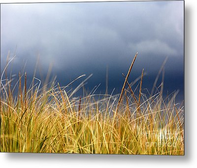 Metal Print featuring the photograph The Tall Grass Waves In The Wind by Dana DiPasquale