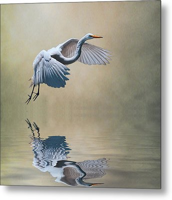 The Early Bird Metal Print by Brian Tarr