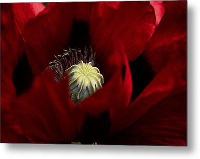 The Embrace Metal Print by Fiona Messenger