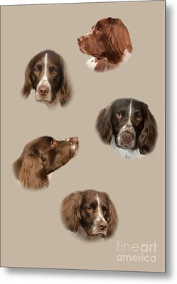 The English Springer Spaniel Metal Print by Linsey Williams