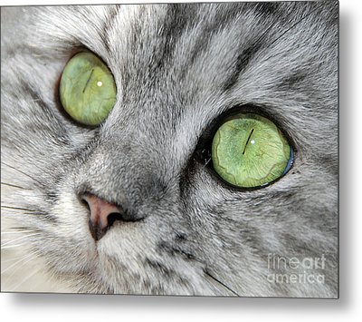 The Eyes Have It Metal Print by Graham Taylor