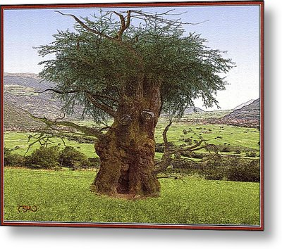 Metal Print featuring the digital art The Face Of The Tree by Pemaro