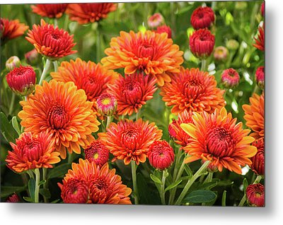 Metal Print featuring the photograph The Fall Bloom by Bill Pevlor