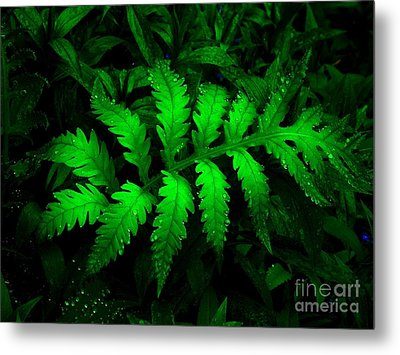 Metal Print featuring the photograph The Fern by Elfriede Fulda