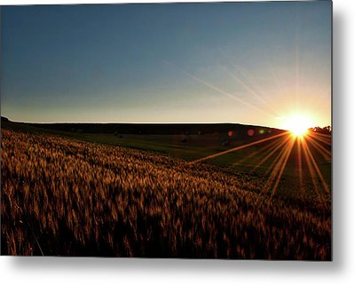 Metal Print featuring the photograph The Field Of Gold by Mark Dodd
