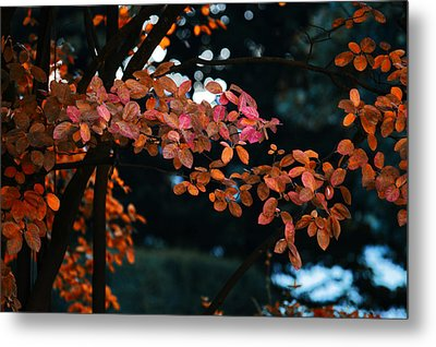 The Flair Of Autumn Metal Print by Nicole Frischlich