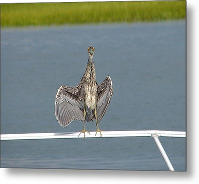 The Flasher 2 Metal Print by Bruce W Krucke