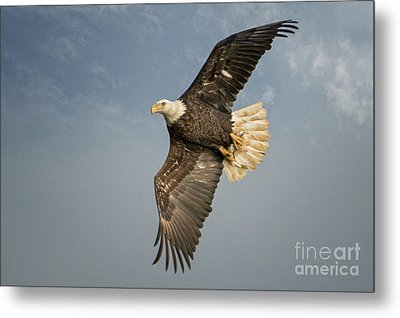 The Flight Metal Print