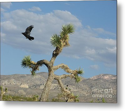 Metal Print featuring the photograph The Flight Of Raven. Lucerne Valley. by Ausra Huntington nee Paulauskaite