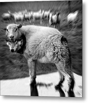 The Flock Is Safe Grayscale Metal Print