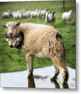 The Flock Is Safe Metal Print