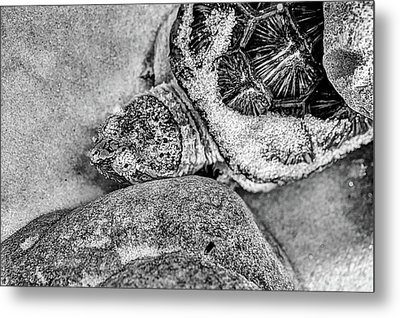 The Florida Snapping Turtle Metal Print