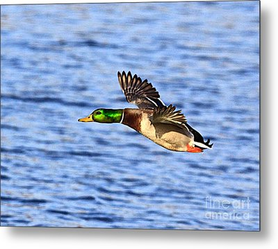 The Fly By Metal Print