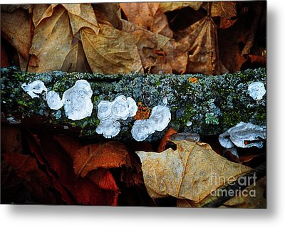 Metal Print featuring the photograph The Forest Floor - Cascade Wi by Mary Machare