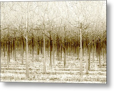 The Forest For The Trees Metal Print by Holly Kempe